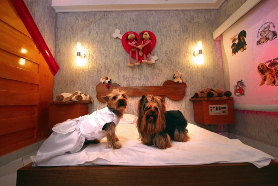 Mascotas en hoteles